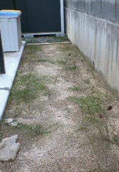 DIY 雑草対策