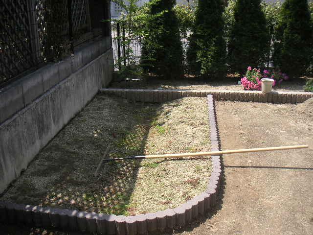 ゼニゴケがはびこる庭の状